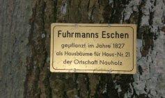 Fuhrmanns_Eschen